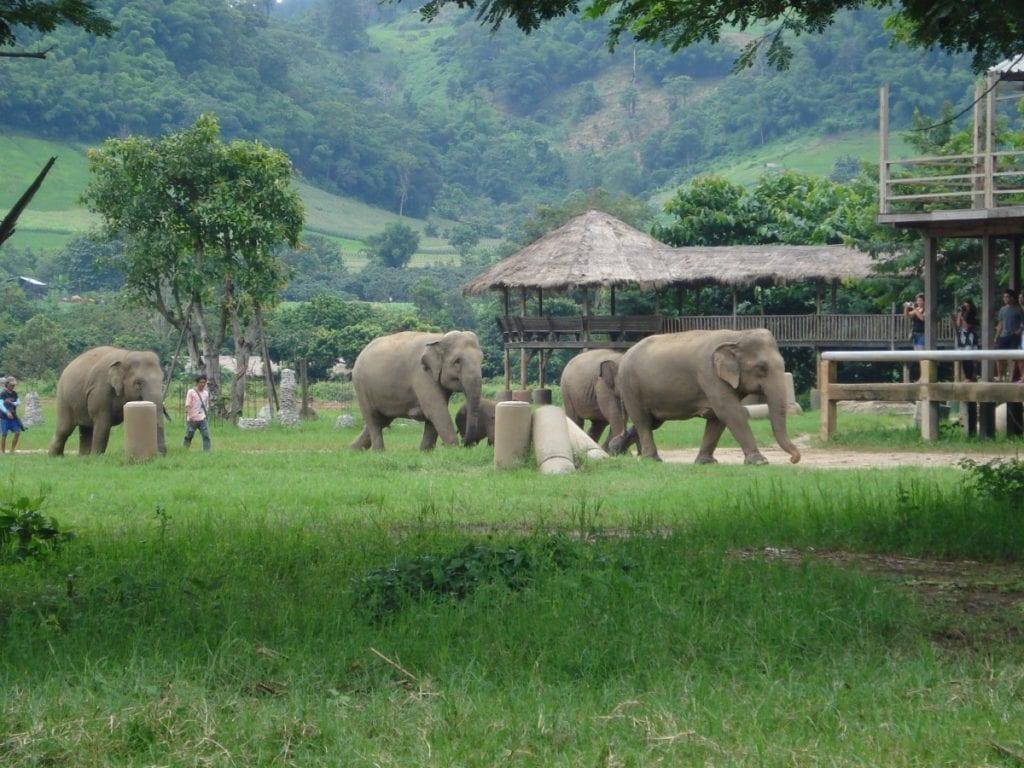 Elephant Nature Park in Chiang Mai, Thailand | CCO Public Domain