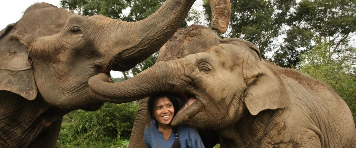 Lek with rescued elephants in Thailand   © Save Elephant Foundation