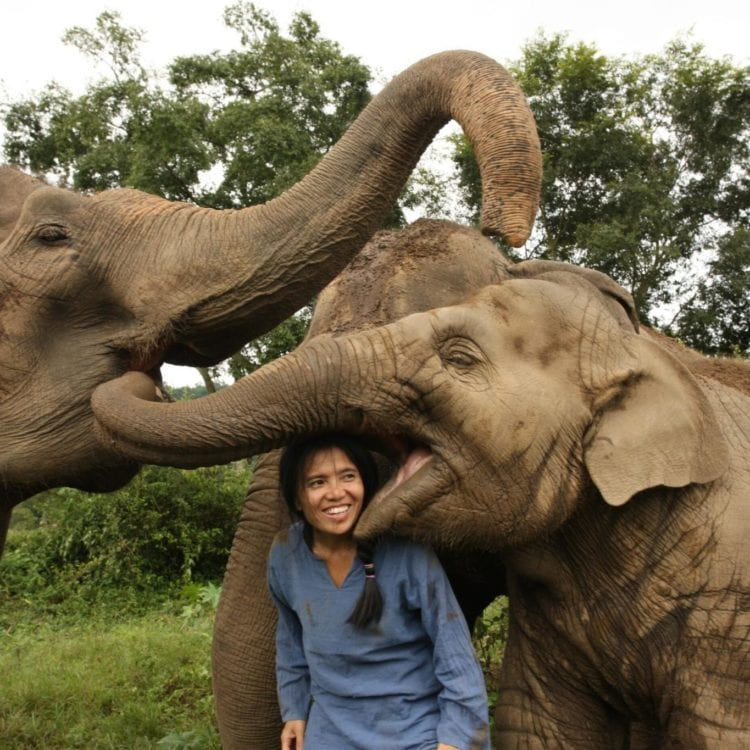 The Woman Saving Thailand's Elephants