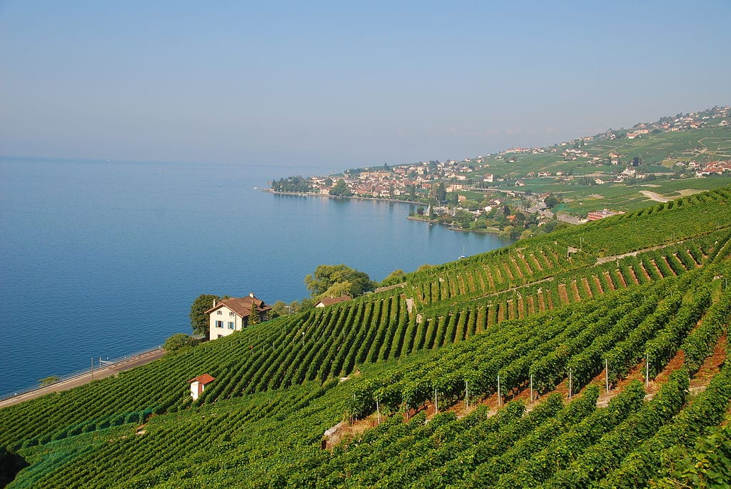 Vineyards in Lavaux, Switzerland | © Ricardo Hurtubia/WikimediaCommons
