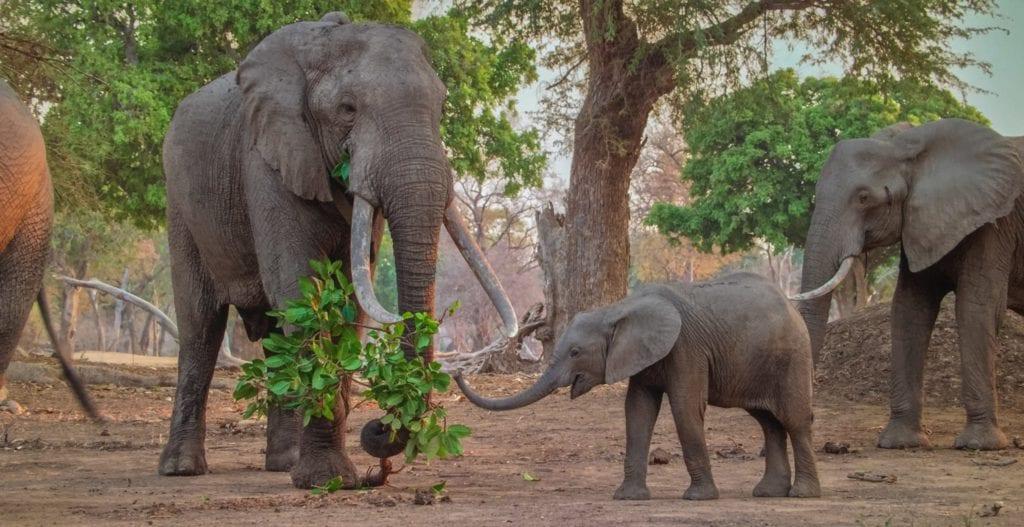 Wild elephants | © Courtesy of Valentina Valentini