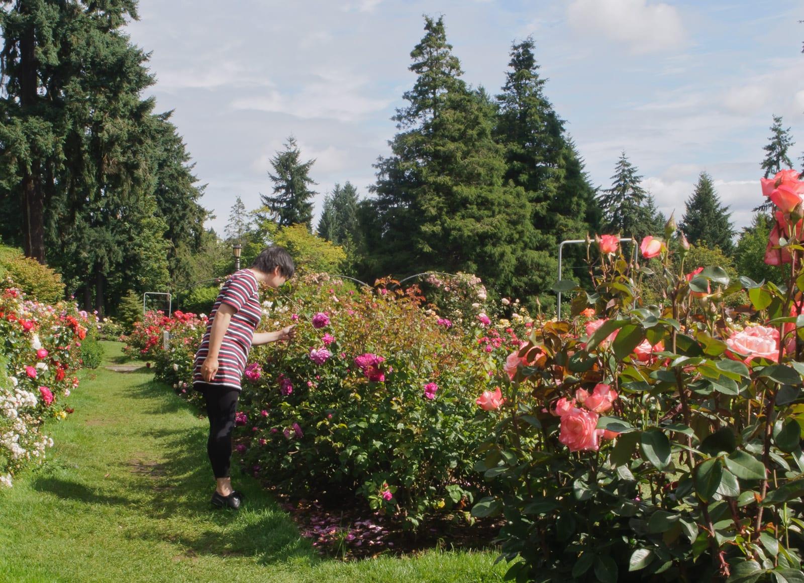 International Test Rose Garden in Flickr | © InSapphoWeTrust/Flickr