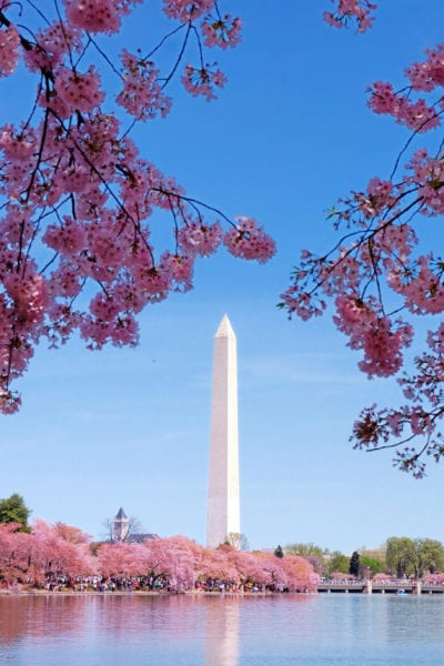Cherry blossoms frame the Washington Monument in Washington D.C., a hub for women-owned businesses | © Shutterstock/Songquan Deng