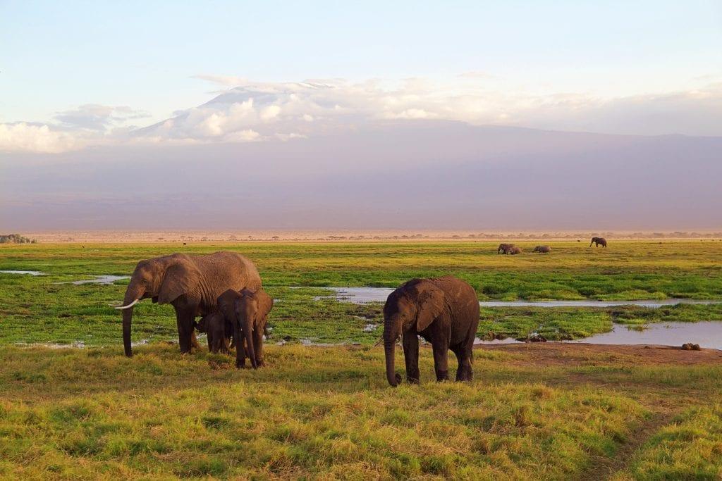 An elephant family | © Jonny Joka/Pixabay