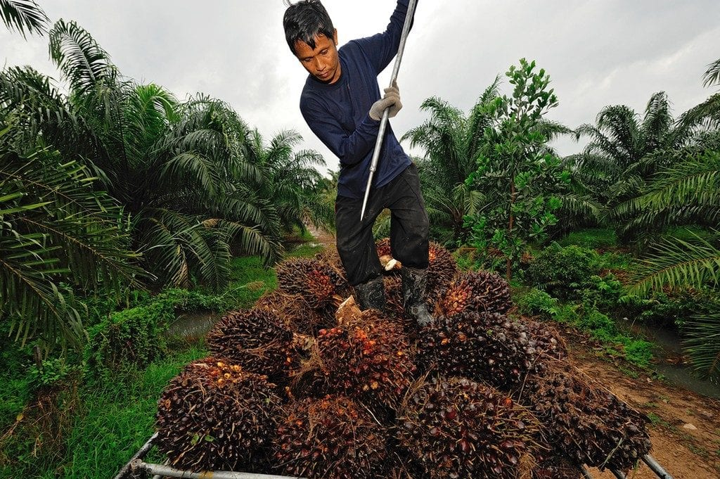 Palm oil cultivation | © think4photop/Shutterstock
