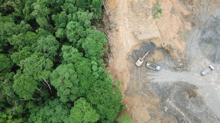 Aerial view of palm oil deforestation | © Rick Carey/Shutterstock